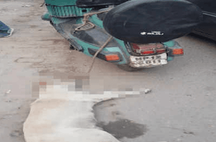Stray dog dies after being tied to scooter and dragged for 3 km